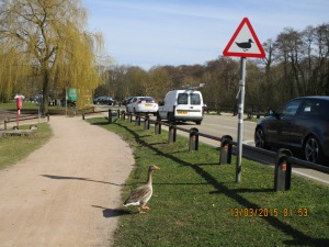 Duck inspects sign