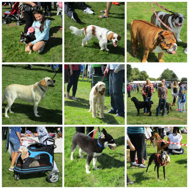 PicMonkey Collage RSPCA Gala Day 2015