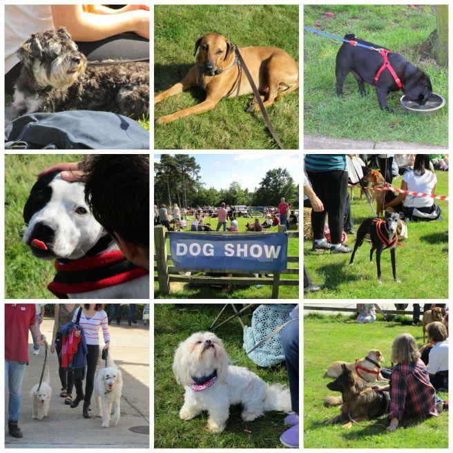 PicMonkey RSPCA Dog Show