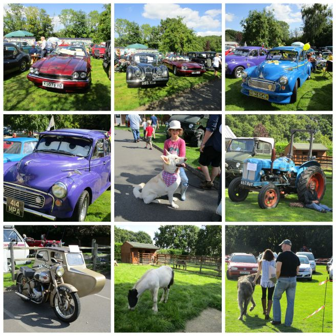 PicMonkey vintage cars and pony area