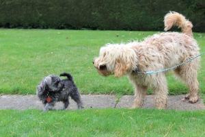 Benji meets Ziggy
