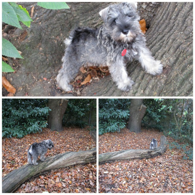 PicMonkey Collage climbing on logs
