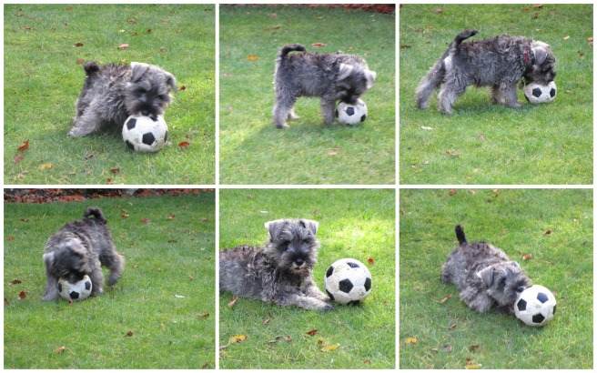 PicMonkey Collage Football 12 weeks